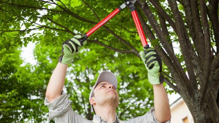 גיזום עצים בהוד השרון