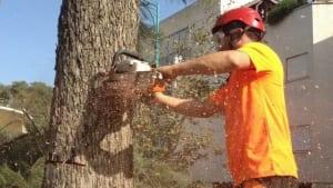 גיזום עץ