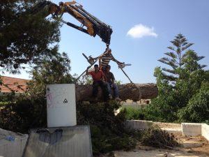גיזום עצים תל אביב