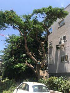 גיזום עצים ברעננה