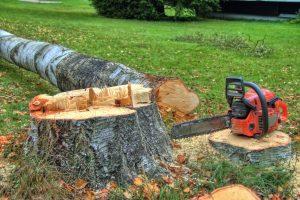 גיזום עצים במרכז