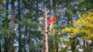 גיזום עצים בארץ