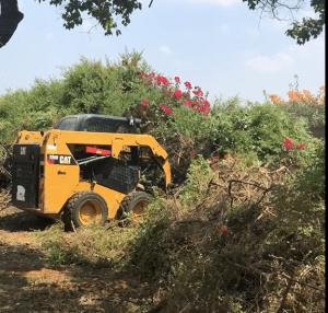 גיזום עצים בנס ציונה
