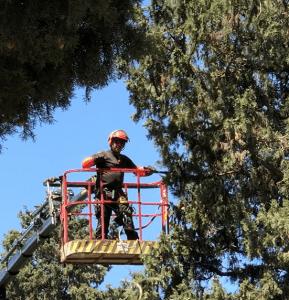 גיזום עצים בראשון לציון