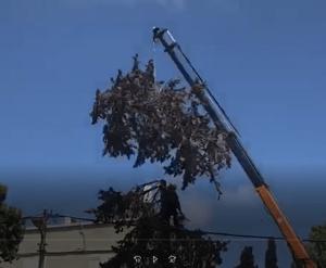 יזום עצים בראש העין