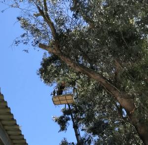 גיזום עצים בבני ברק