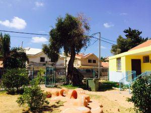 גיזום עציםבראשון לציון