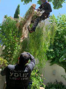 גיזום עצים ברמת השרון