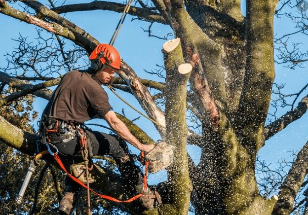 כריתת עצים ברמת גן