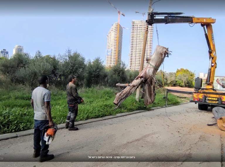 טופס אישור כריתת עצים