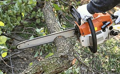 כריתת עצים באור יהודה