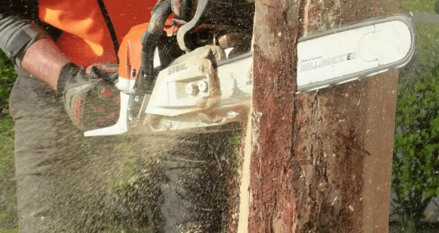 אישור כריתת עצים