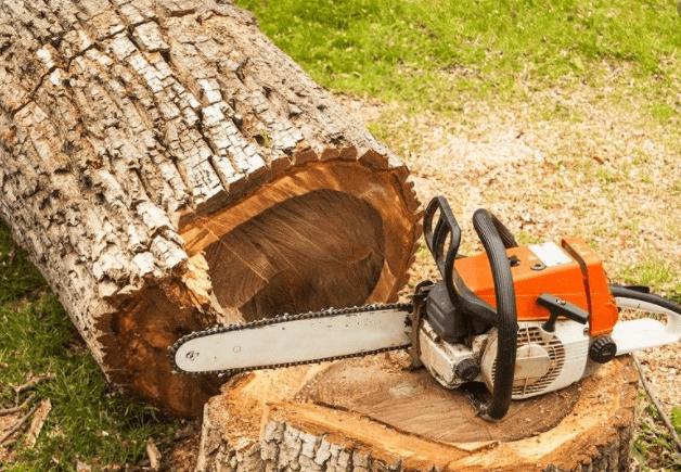 כריתת עצים בגבעת שמואל