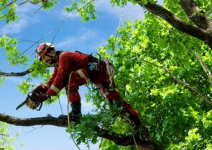 כריתת עצים הרצליה
