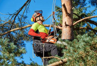 גיזום עצים מקצועי