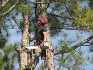 כריתת עצים בנתניה