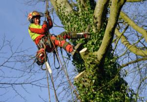 כריתת עצים בפתח תקווה