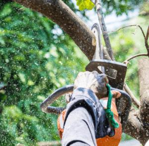 כריתת עצים ביהוד