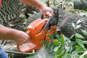 כריתת עצים בנס ציונה